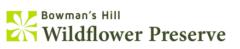 Bowman's Hill
