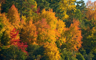 Discover Beautiful Vistas in PA for Viewing Fall Foliage
