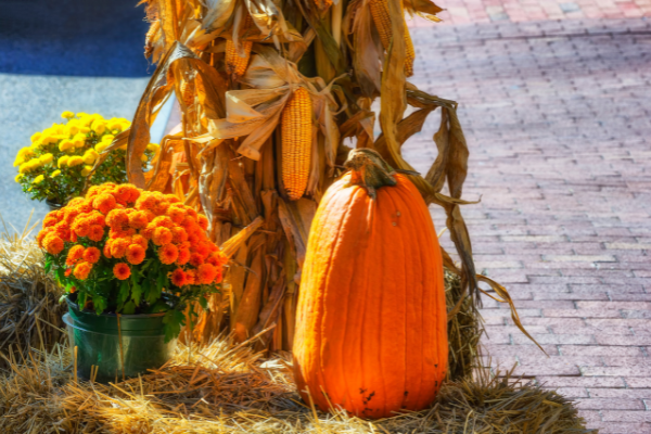 The Best Fall Festivals to Enjoy with Your Family